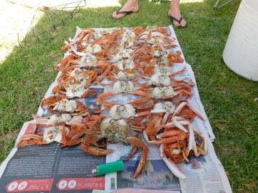 Ardrossan crabs
