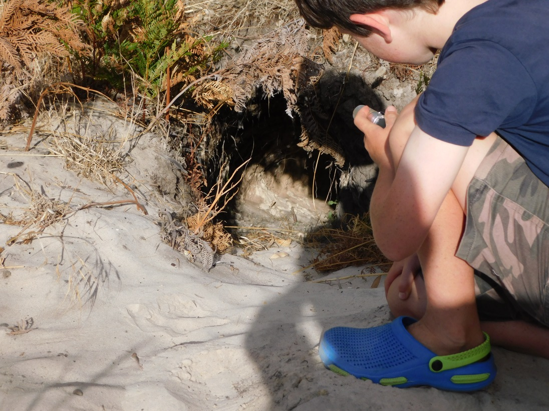 Lach shining his torch down the wombat burrow