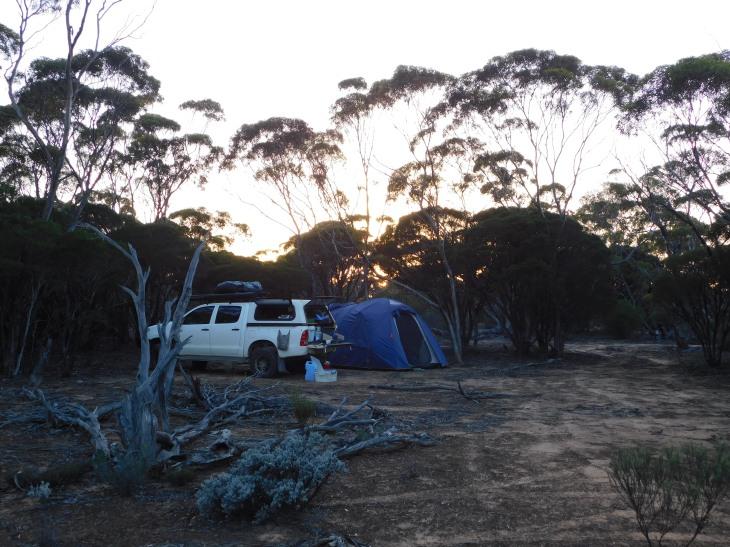 Nullabor - sunrise at bush camp outside Balladonia