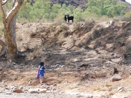Parachilna boys hunting goats