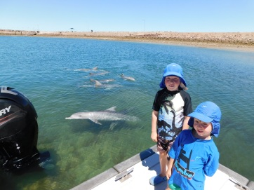 Whyalla dolphin pod