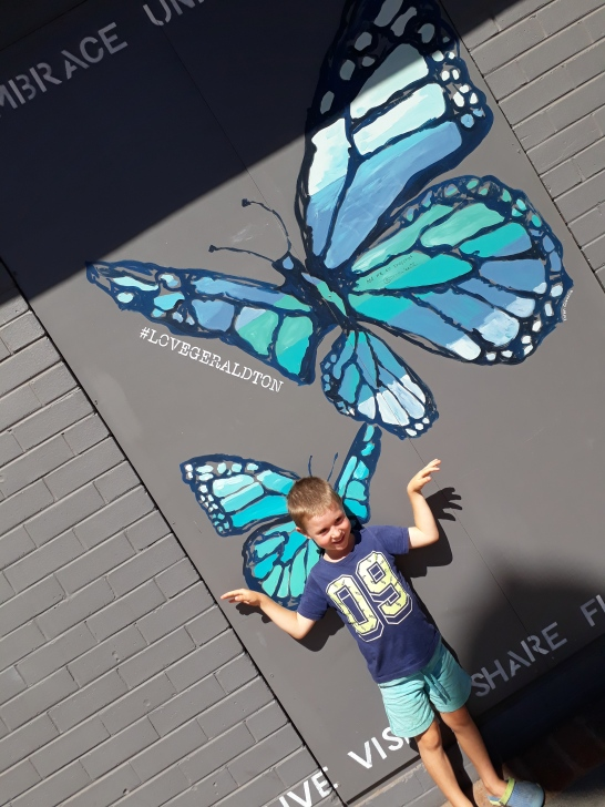 cam butterfly
