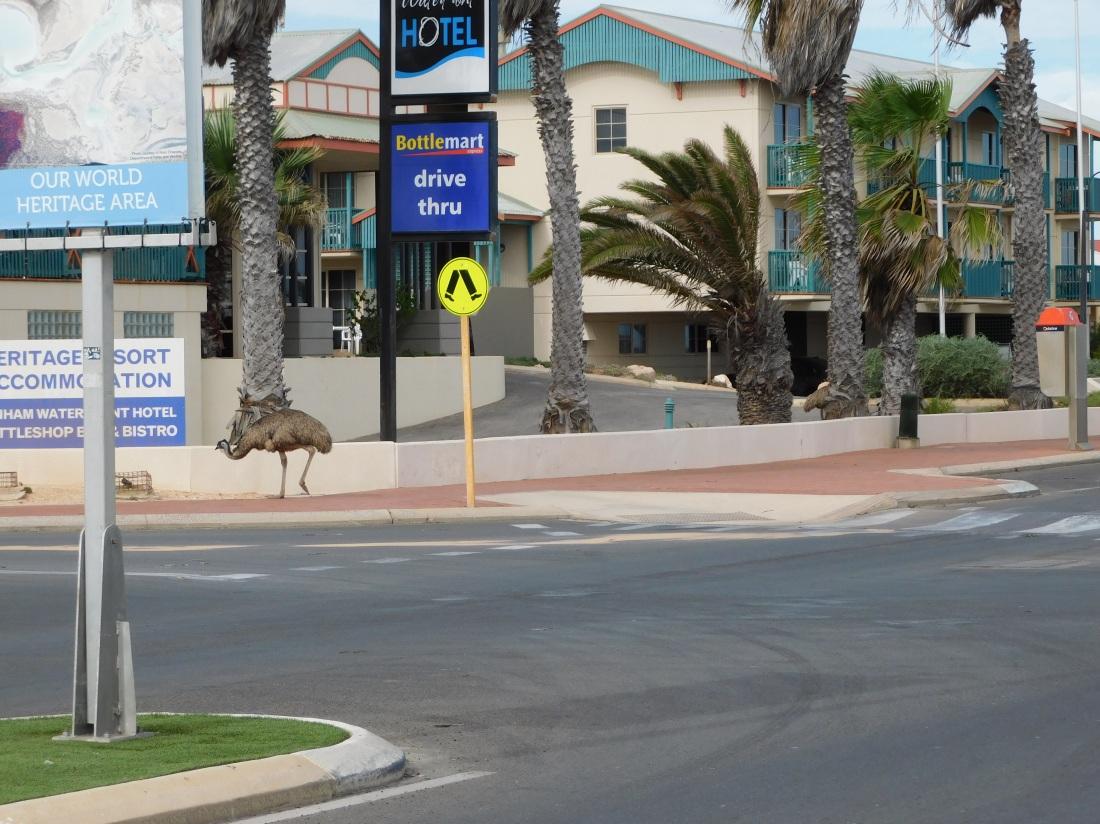 Denham emu on the main drag