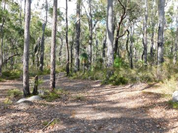 Margaret River state forest perfect peaceful camp for easter