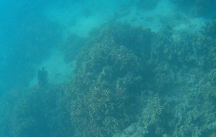 Ningaloo coral