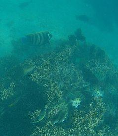 Ningaloo fish