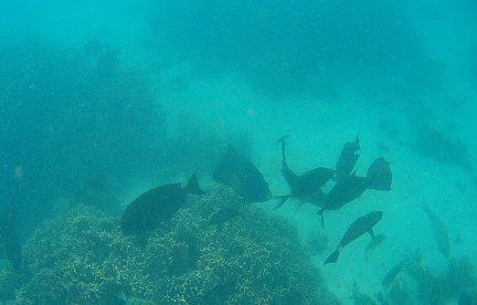Ningaloo turquoise bay