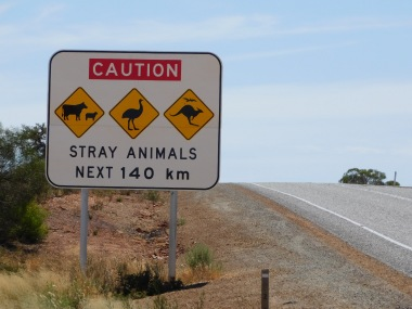 sign stray animals