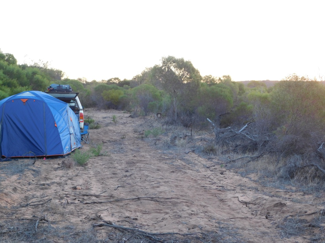 Stockyard Gully campsite