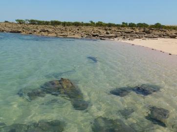 Cape Lev sharks circling at the boat ramp