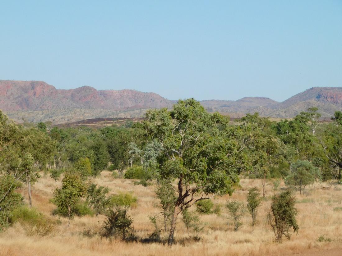 Duncan Road Landscape