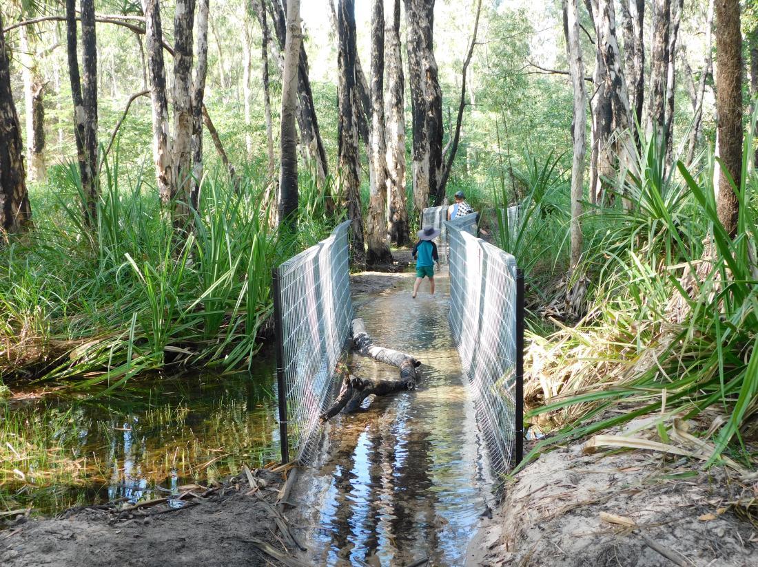 Kakadu croc safetly on Barramundi Gorge walking track