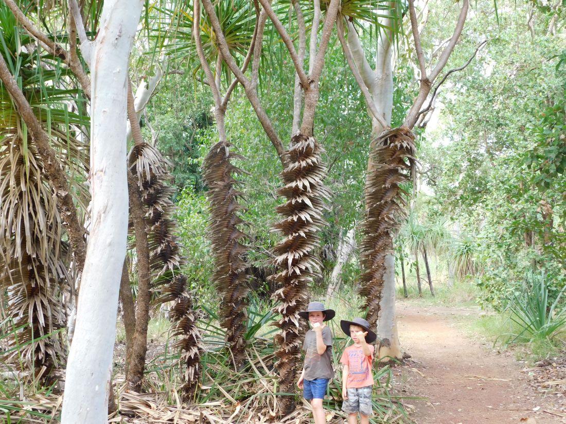 Kakadu Palms