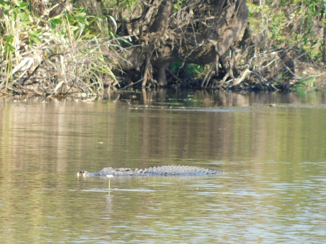 Shady Camp Saltwater Croc and Lilly