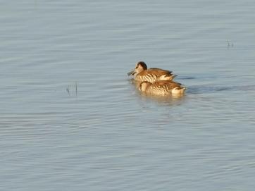 Bird-Coongie Lake
