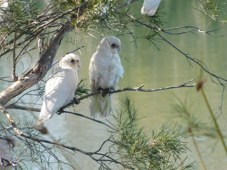 Bird-Dalhalsie (4)