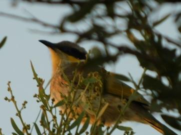 Bird-Dalhalsie