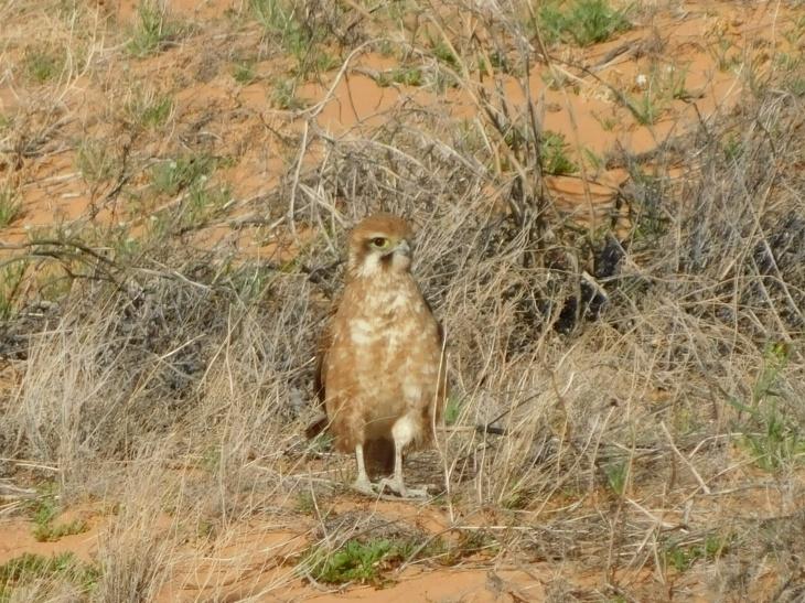 Bird-Simpson Desert (4)
