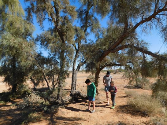Birdsville- Waddi Trees (2)