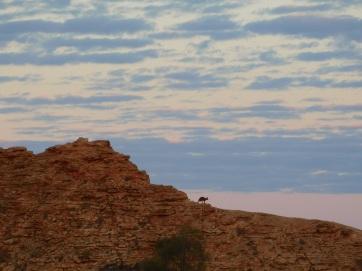 ChambersPillar- sunrise with kangaroo