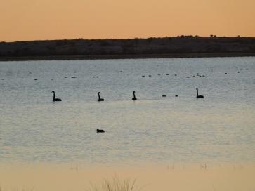 Coongie Lake (2)
