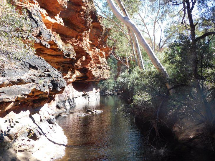 Kings Canyon Rim walk-Garden of Eden (3)