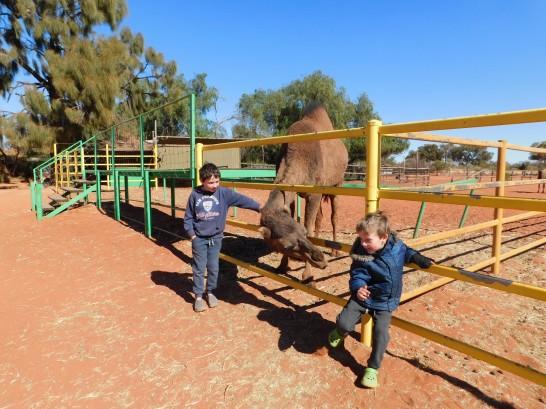 Kings Creek Station Camel (2)