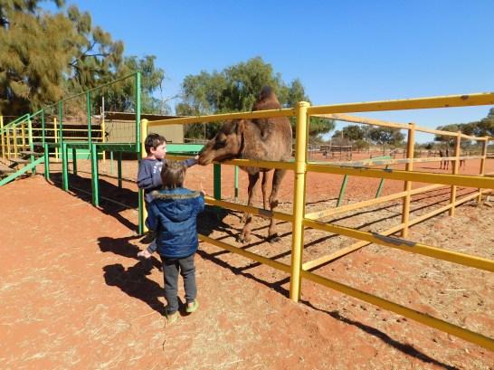 Kings Creek Station Camel