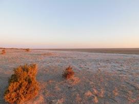 Lake Eyre (4)