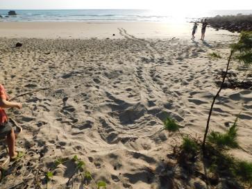 Nhlunbuy- turtle nest (2)