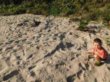 Nhlunbuy- turtle nest