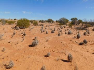 Simpson Desert (22)