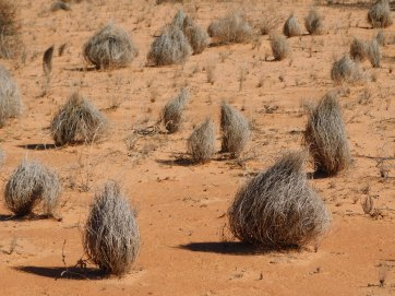 Simpson Desert (23)