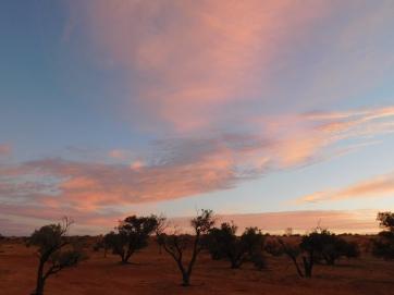 Simpson Desert (34)