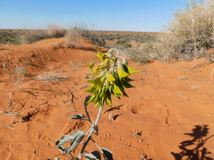 Simpson Desert (44)
