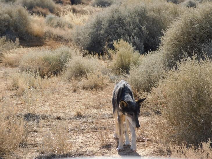 Simpson Desert (46)