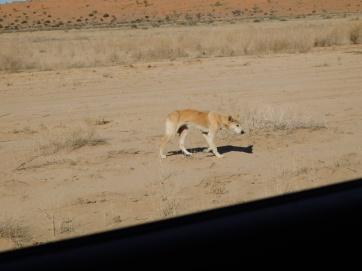 Simpson Desert (47)