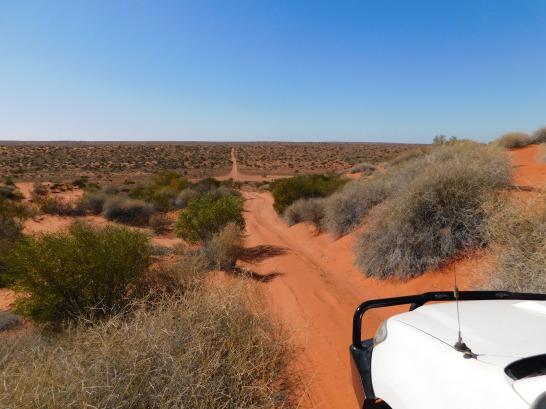 Simpson Desert (5)