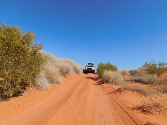 Simpson Desert (6)