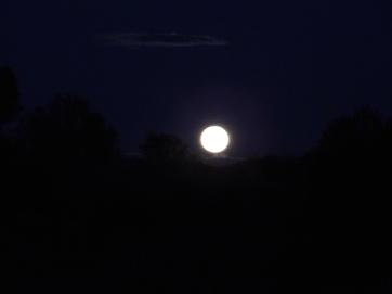 Simpson desert- moon rise