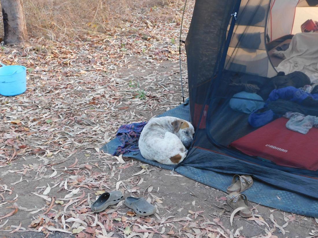 Batavia Landing - Camp Dog