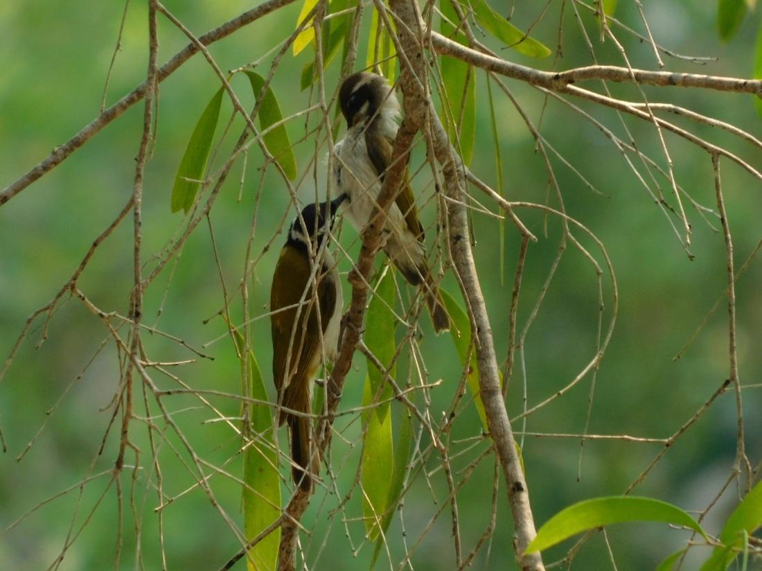 Bird- Oyala NP