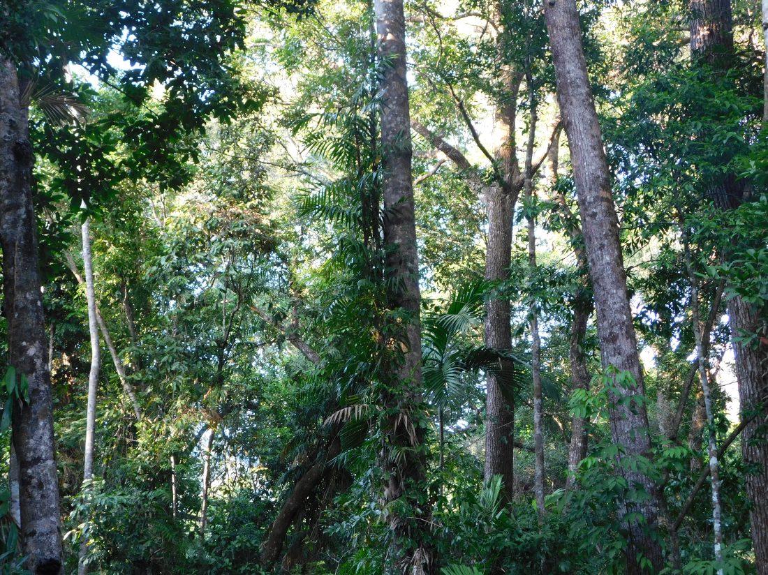 Bloomfield Track- Rainforest Camp (2)