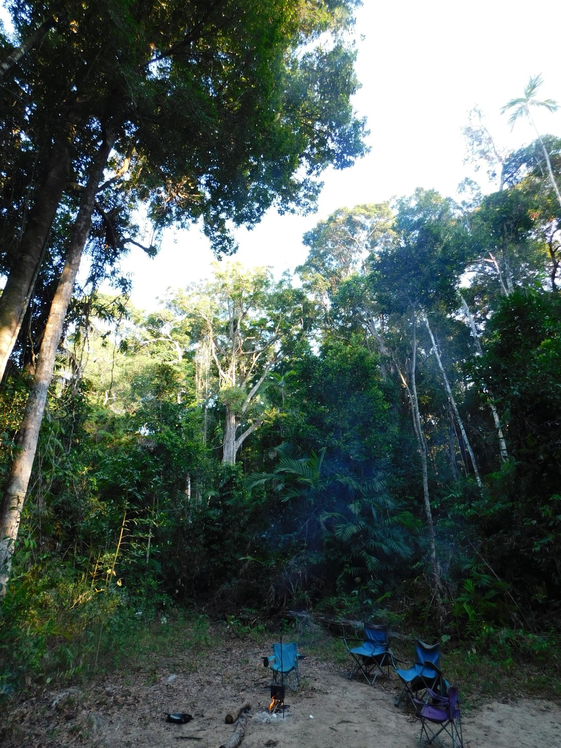 Bloomfield Track- Rainforest Camp