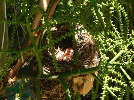 Cairns - Birds nest