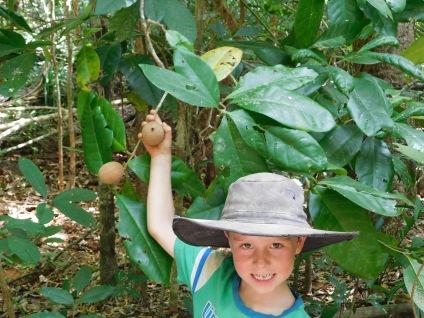 Cape York- Rainforest