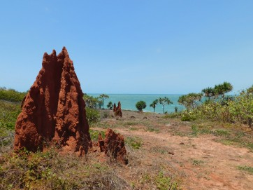 Cape York - Termites meet the sea