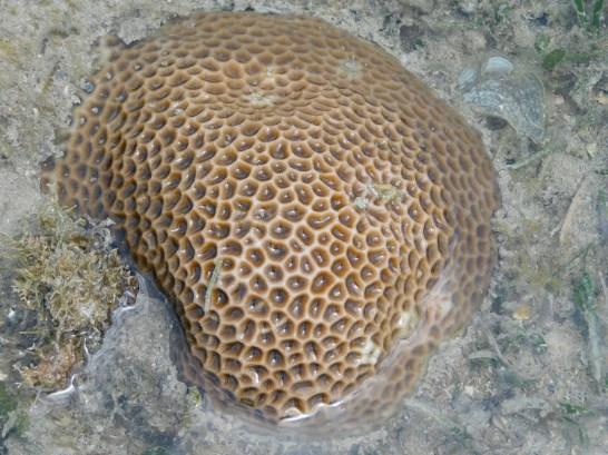 Chilli Beach - Coral