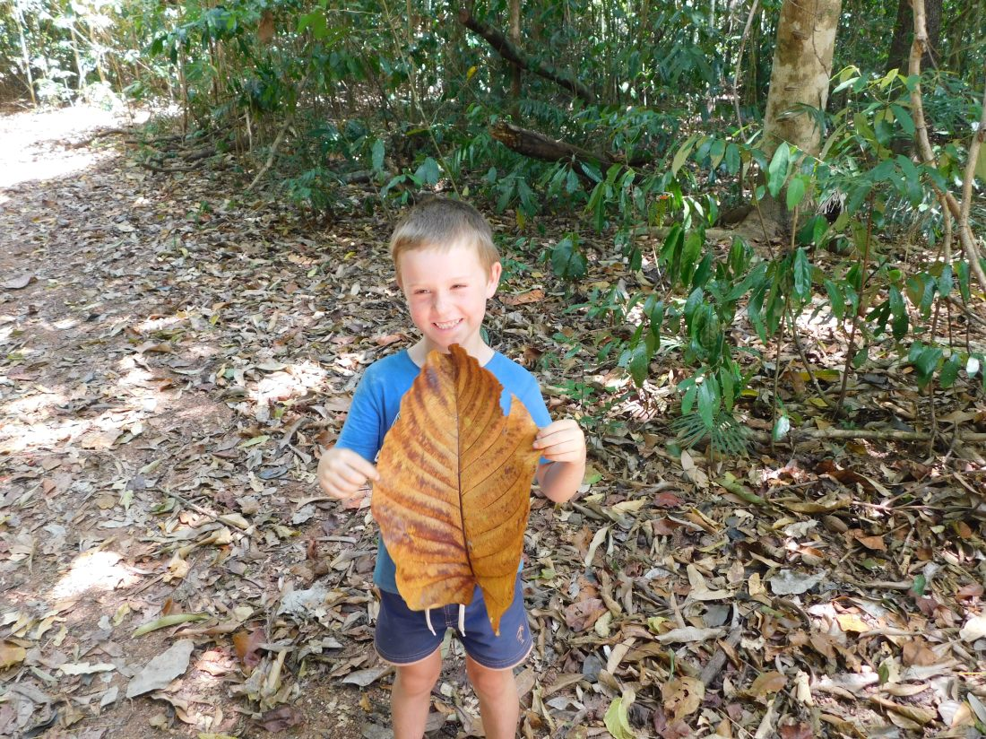 Chilli Beach Huge leaf