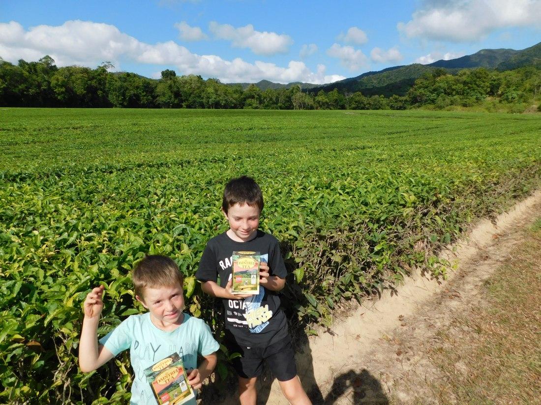 Daintree Tea Farm